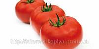 Семена томата Царин F1 500 сем. Сингента.