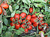 Семена томата Хайнц 3402 F1 5000сем.Heinz seed.