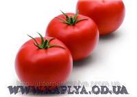 Семена томата Эйфория F1 500 сем. Сингента.
