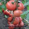 Семена томата Эсмира F1 100 сем. Рийк цваан.