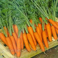 Морковь Саманта F1 25 000 сем. Саката.