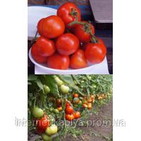 Семена томата Пабло F1 1000 сем.Саката.