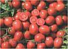 Семена томата Вулкан F1 25000 сем.Нунемс.