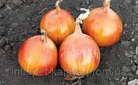 Семена лука Альбатрос F1 250000 сем. Maraldi Sementi.