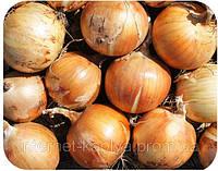 Семена лука Спениш Медальон F1. 250000 сем. Саката