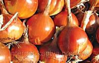 Семена лука Калипсо F1 250 000 сем. Maraldi Sementi