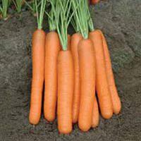 Морковь Монанта F1 1 кг. Рийк Цваан.