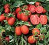 Семена томата Платон F1 10000сем. Ларк сидс.