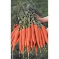 Морковь Магно  F1 (калибр>1.6)   100 000 сем. Рийк Цваан.
