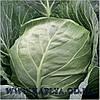 Семена капусты купить Этма калиброванное. 2500 сем. Рийк цван.