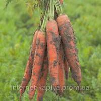 Морковь Трафорд F1 (калибр<1.6)   1 000 000 сем. Рийк Цваан.