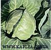 Семена капусты Рейма калиброванное. 2500 сем. Рийк цваан.