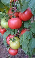Семена томата Демироса F1 250 сем. Enza Zaden Organic