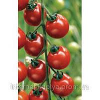 Семена томата Нектар F1 250 сем. Enza Zaden