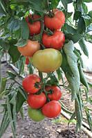 Семена томата ТЕХ-2720  F1 500 сем. Takii Seeds