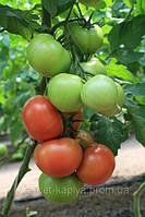 Семена томата Ралли F1 250 сем. Enza Zaden