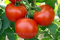 Семена томата Эйджен F1 250 сем. Enza Zaden