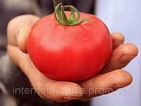 Семена томата Аманета F1 250 сем. Enza Zaden