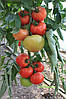 Семена томата ТЕХ-2720  F1 250 сем. Takii Seeds