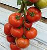 Семена томата Белле F1 250 сем. Enza Zaden