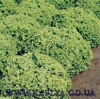 Семена салата Локарно 1000 сем.Рийк цваан.