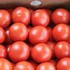 Семена томата Афамия F1 1000 сем. Enza Zaden