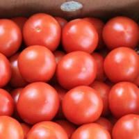 Семена томата Афамия Луанова F1 500 сем. Enza Zaden