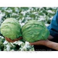Семена салата Фиоретт 1000 сем.Рийк цваан.