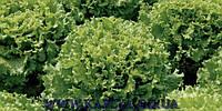 Семена салата Имейджинейшнл 5000 сем.Рийк цваан.