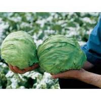 Семена салата Фиоретт 5000 сем.Рийк цваан.
