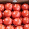 Семена томата Афамия F1 250 сем. Enza Zaden