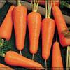 Семена моркови Купар F1 1,8 - 2,0 1 000 000 сем. Бейо заден.