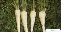 Семена петрушки Арат 500 гр. Бейо заден.