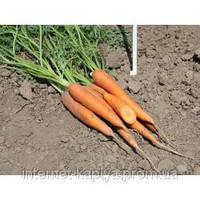 Семена моркови Сиркана F1 25000 сем. Нунемс.1,6-1,8мм.
