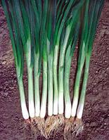 Семена лука на перо Грин Баннер 250 000 сем. Seminis
