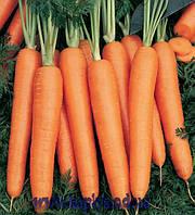 Семена моркови Нарбонне F1 2,2 - 2,4 1 000 000 сем. Бейо заден.