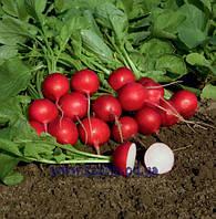 Семена редиса Ровер F1 2,25-2,50 50 000 сем. Бейо заден.