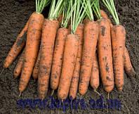 Семена моркови Бангор F1 2,0 - 2,2 1 000 000 сем. Бейо заден.