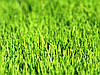 Семена газонной травы Декоративная 15 кг. RAGT