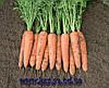 Семена моркови Белградо F1 2,0 - 2,2 1 000 000 сем. Бейо заден.