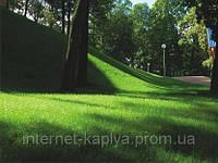 Семена газонной травы Тенеустойчивая 1 кг. RAGT