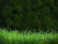 Семена газонной травы Придорожная 25 кг. RAGT