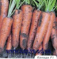 Семена моркови Канада F1 1,6-1,8 25 000 сем. Бейо заден.
