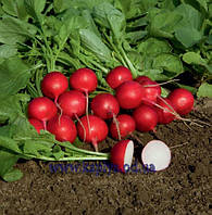 Семена редиса Ровер F1 2,75 – 3,00 50 000 сем. Бейо заден.