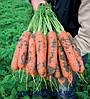 Семена моркови Нерак F1 2,2 - 2,4 1 000 000 сем. Бейо заден.