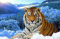 """Набор алмазной вышивки (мозаики) """"Уссурийский тигр"""""""