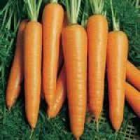 Семена моркови Вита Лонга F1 500 гр. Бейо заден.
