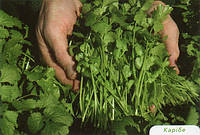 Семена кинзы Карибе 500 гр. Бейо заден.