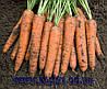 Семена моркови Бангор F1 1,8 - 2,0 1 000 000 сем. Бейо заден.
