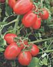 Семена томата Хайнц 8504 F1 500сем.Heinz